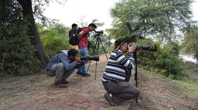 10 steps: How to be a birdwatcher (hobbyist)