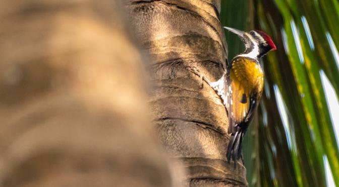 Birdwatching In Goa